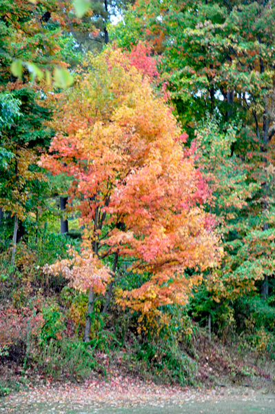 a colorful tree at River Beach Campsites