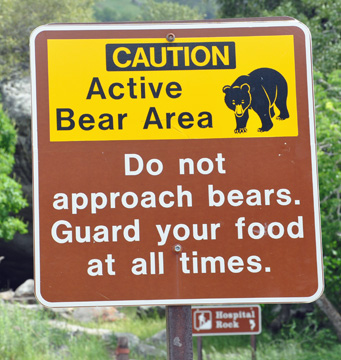 Caution of bears at Sequoia NationaL Park