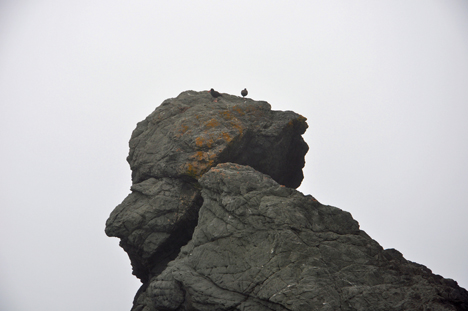 Two birds on top of the rock