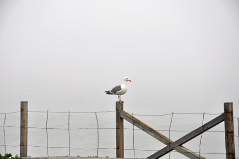seagull kept flying back and forth in front of the camera